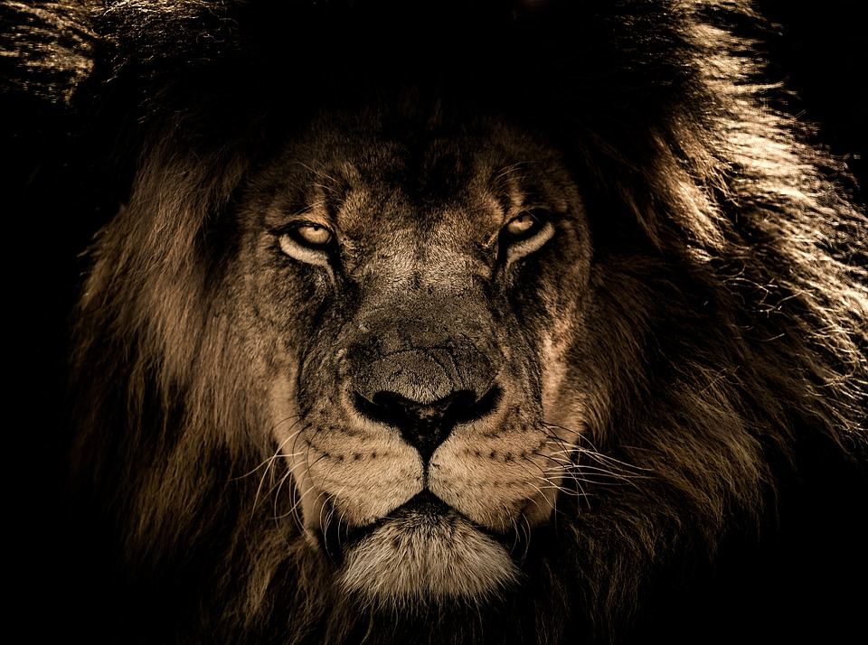 מזל אריה חודש אב במשנת הצדיק משטפנשט